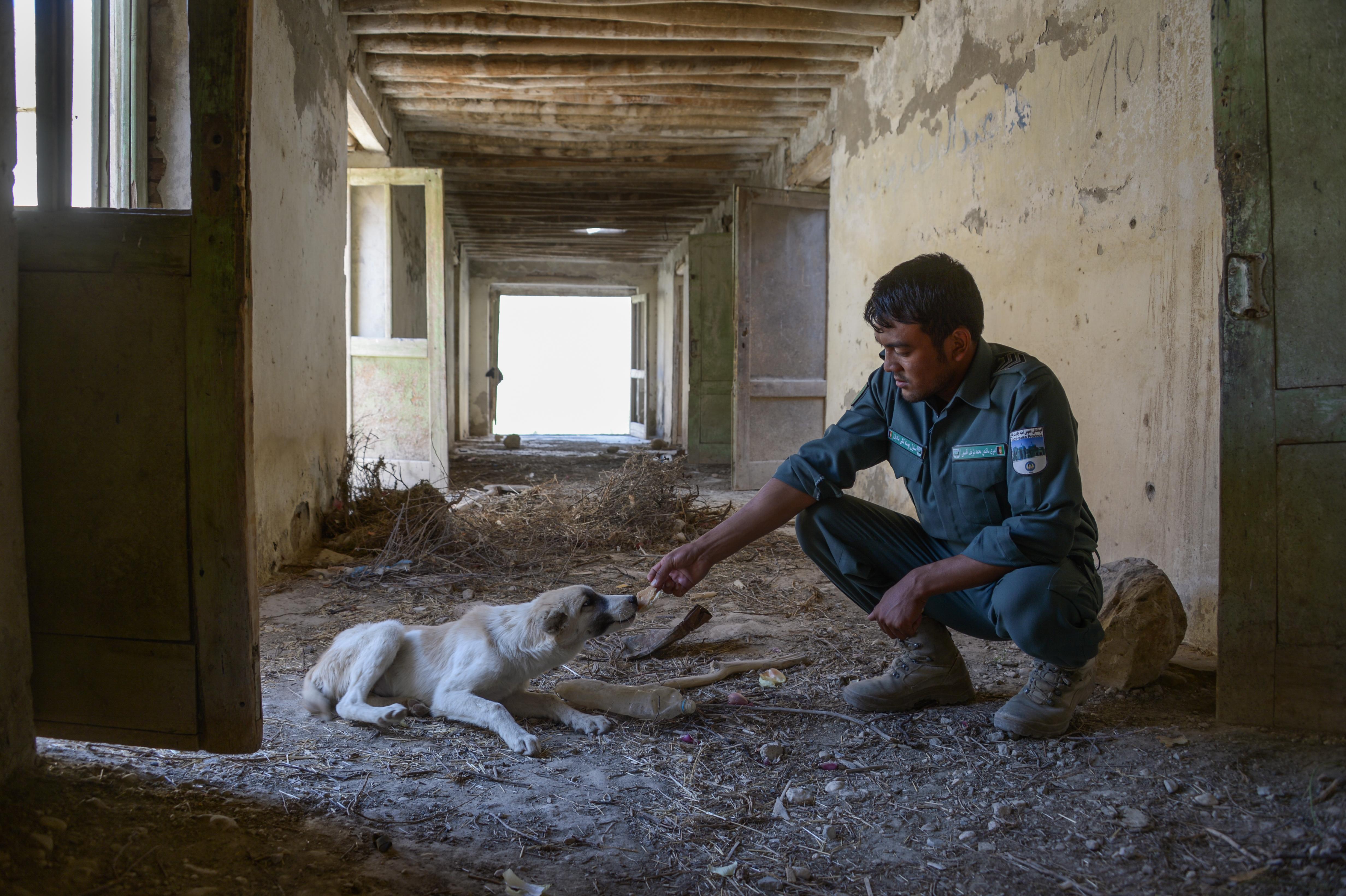 afghan police and dog