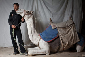 CAIRO, EGYPT - OCTOBER 22 : Camel Jockey, Sameh Sabri-Lemmon 19,  at the Sabri Lemmon residence in Nazlet El Samman  on October 22, 2011  in Giza, Egypt.  (Photo by Kim Badawi/Global Post)