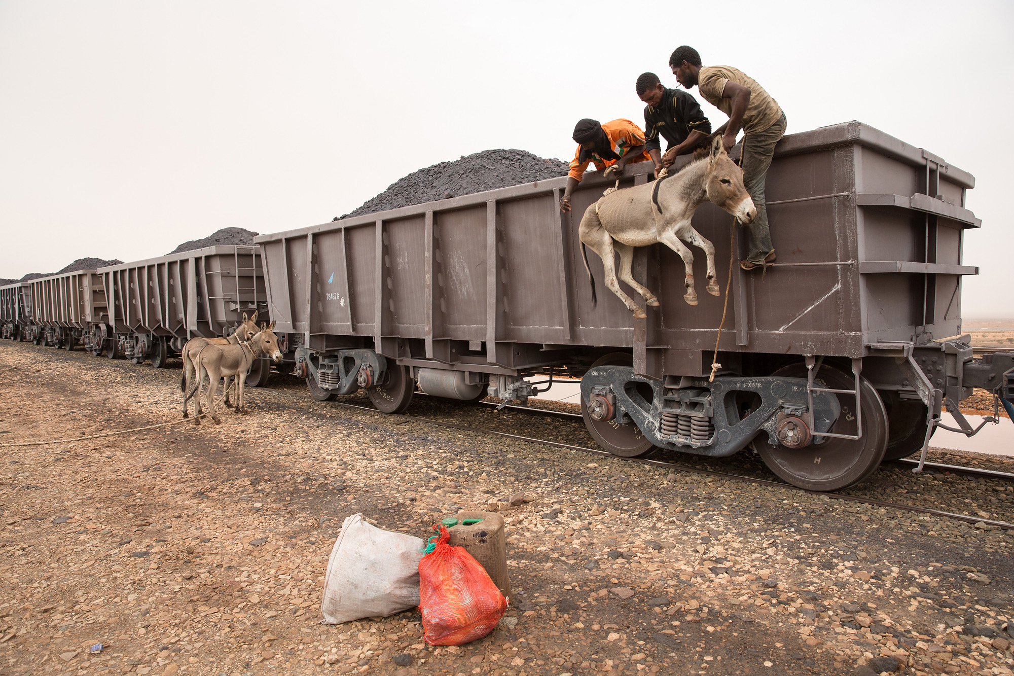 A donkey is loaded onto a cargo train using ropes. The train crosses the Sahara desert, transporting iron ore from the mine at Zouérat, in northern Mauritania, to the Nouadhibou harbor, on the Atlantic coast of West Africa. It's free to travel for the traders that transport food and livestock, but they have to endure a 20-hour trip with periods of strong wind and temperatures that can reach 50 degrees Celsius in the summer. (George Popescue/GroundTruth)