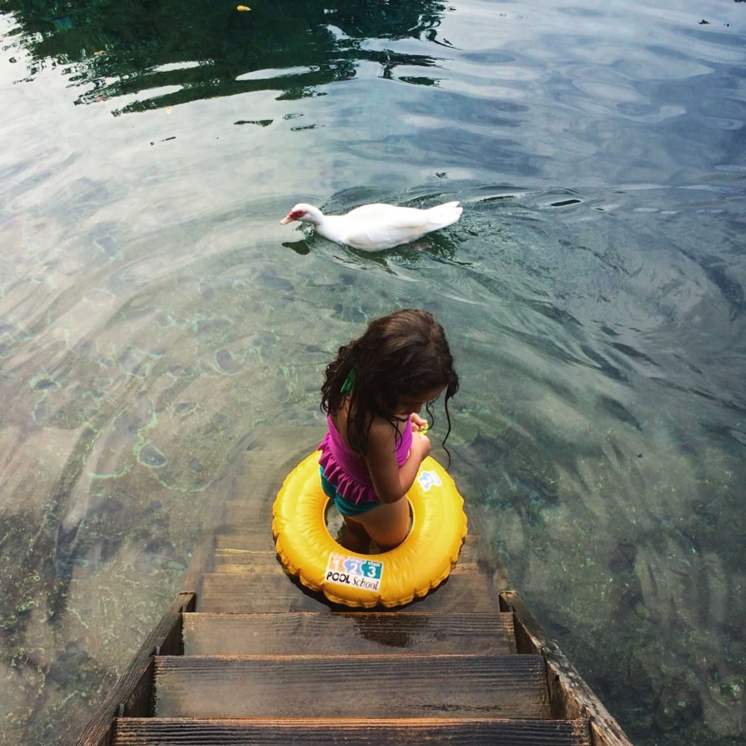 Allie, 4, waits for the duck to leave before entering the Guama lagoon inside the Indigenous Eyes Ecological Park in Punta Cana, Dominican Republic. A truck full of pigs waits at a stoplight in Santo Domingo, Dominican, Republic. (Tatiana Fernandez Geara)