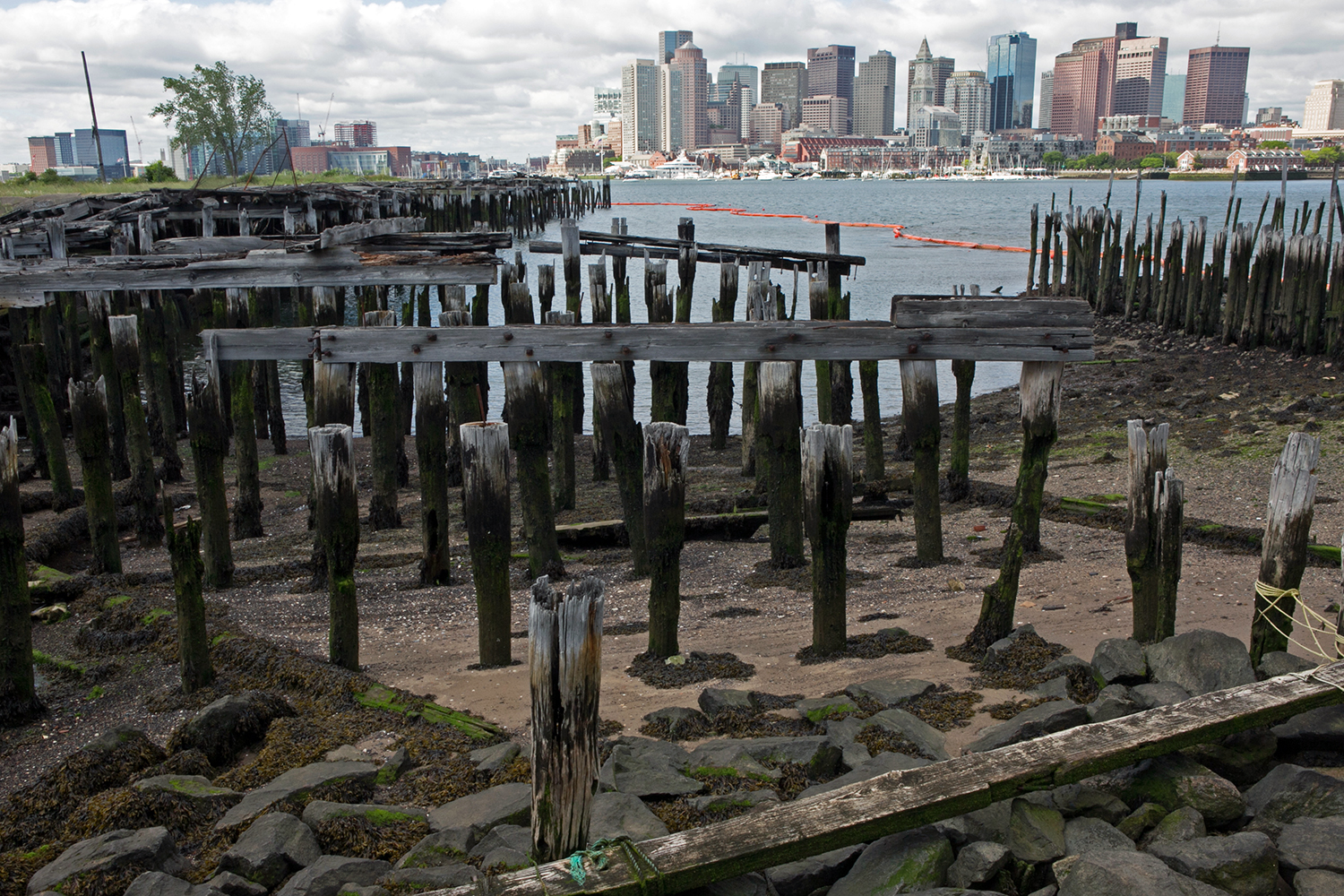 "Decaying pilings are seen at the site where Fort Point Associates will leave a ""living shoreline"" between its Clippership Wharf development and the harbor. (Photo by Lauren Owens Lambert/GroundTruth)"