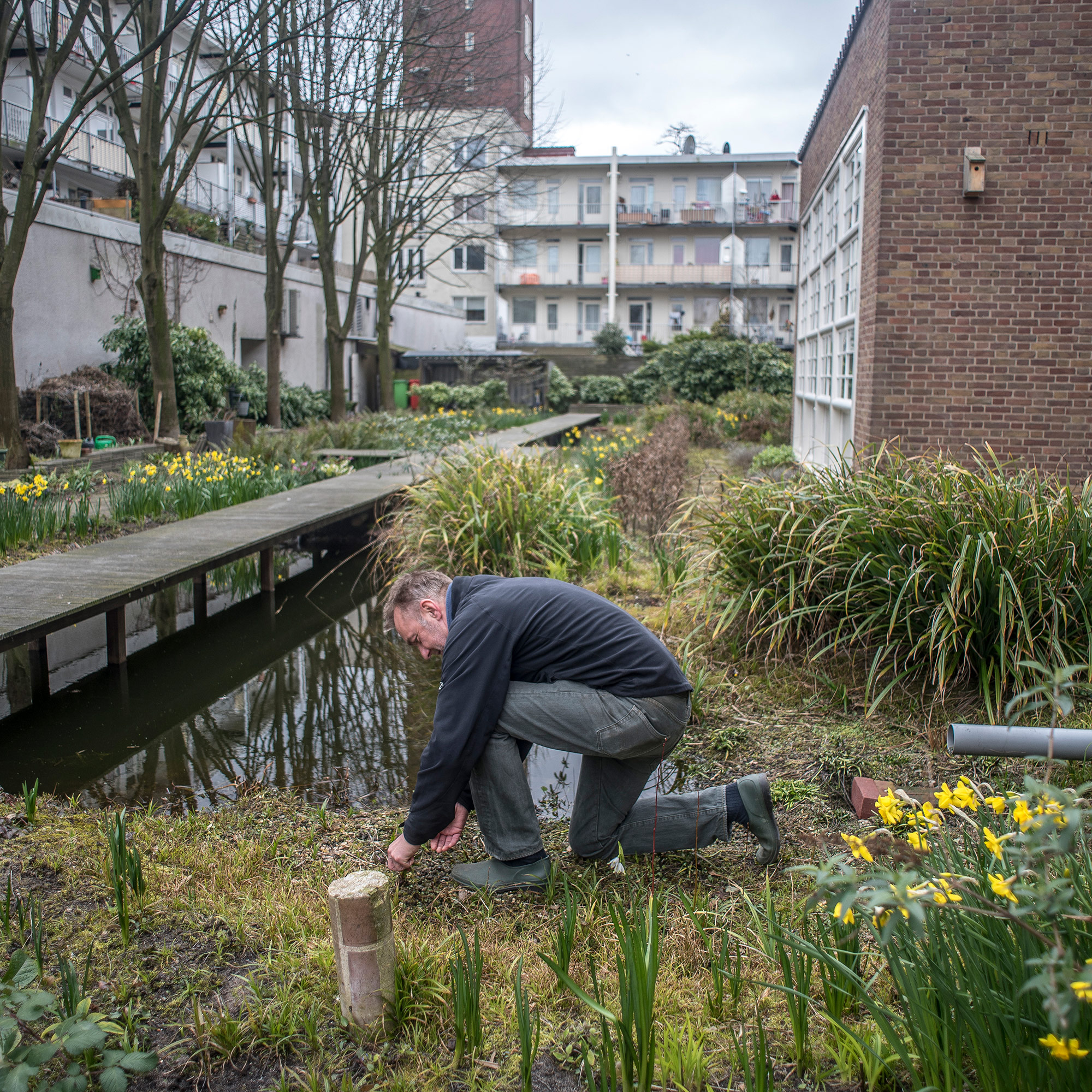 Arnoud Hekken helped start and maintains De Tuin van Jan. It's hidden behind Meesteropleiding Coupeur in West Amsterdam. (Photo by Joris van Gennip/GroundTruth)