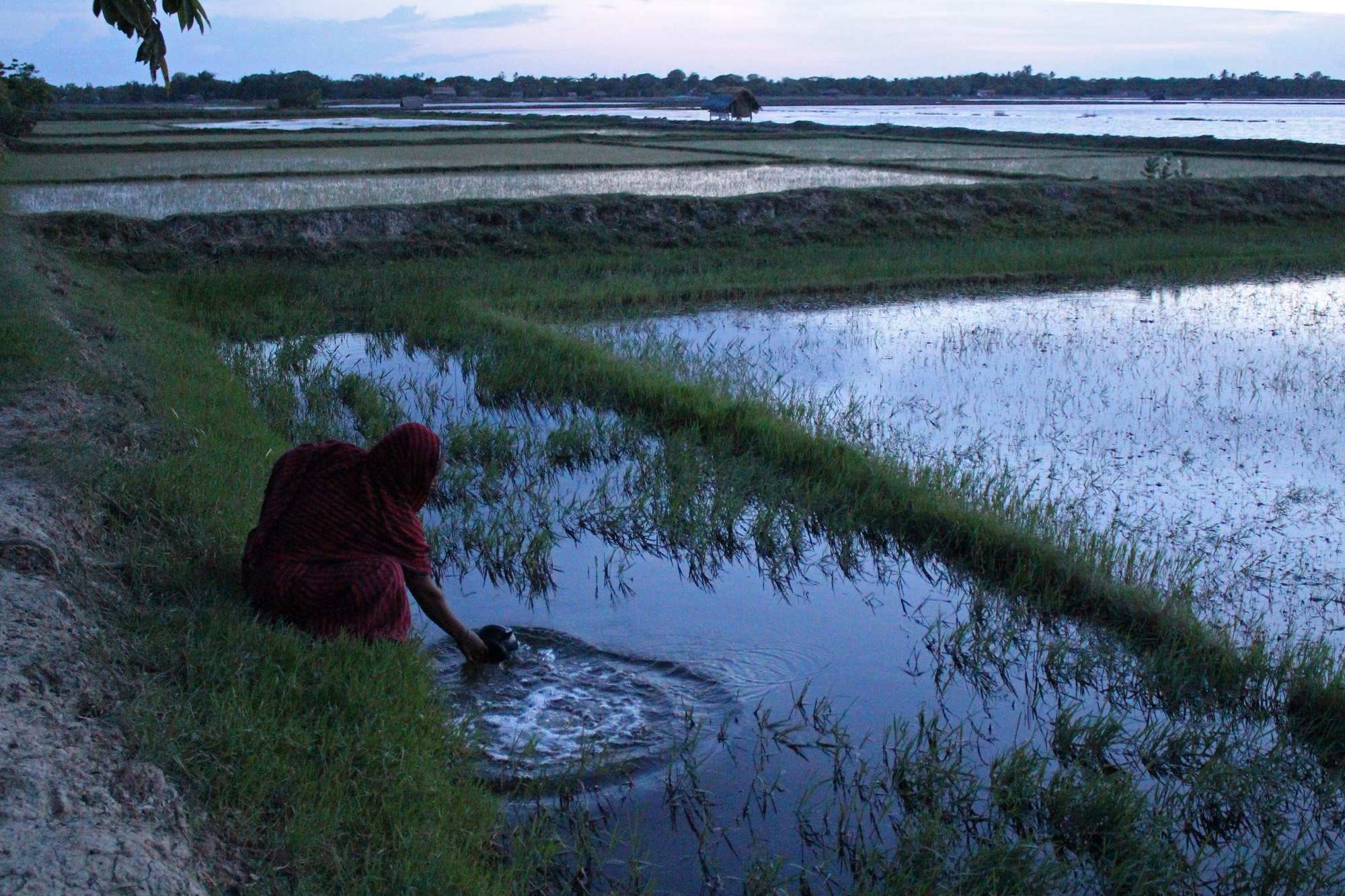 "A woman fetches water for washing clothes from a shrimp farm in Kochukhali village. While the salt water makes it hard to cultivate rice, the traditional crop in the area, shrimp – referred to by some farmers as ""white gold"" – thrives in the water. (Photo by Neha Thirani Bagri/GroundTruth)"