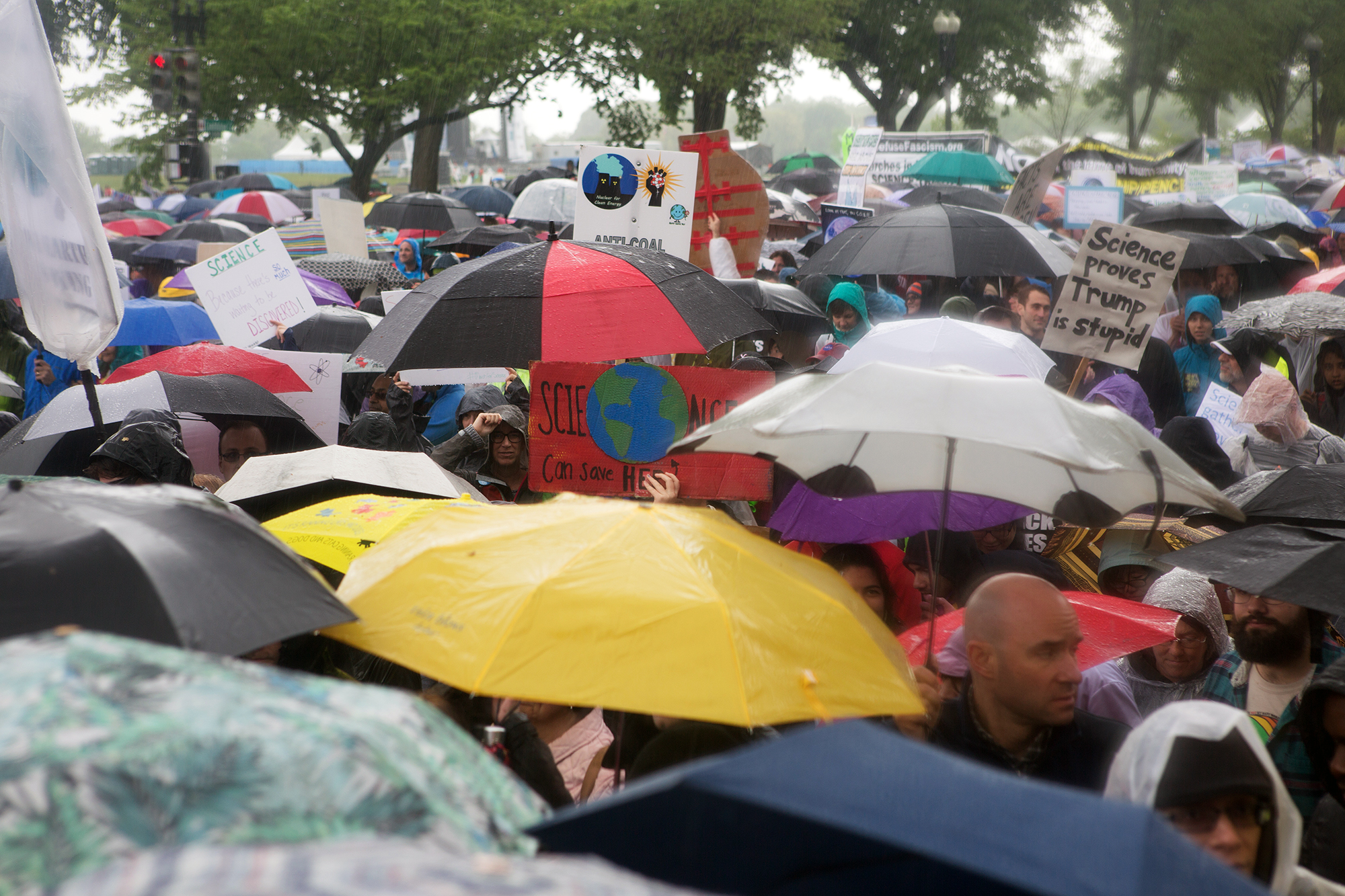 Umbrellas on a rainy day at the Science March in Washington, D.C.