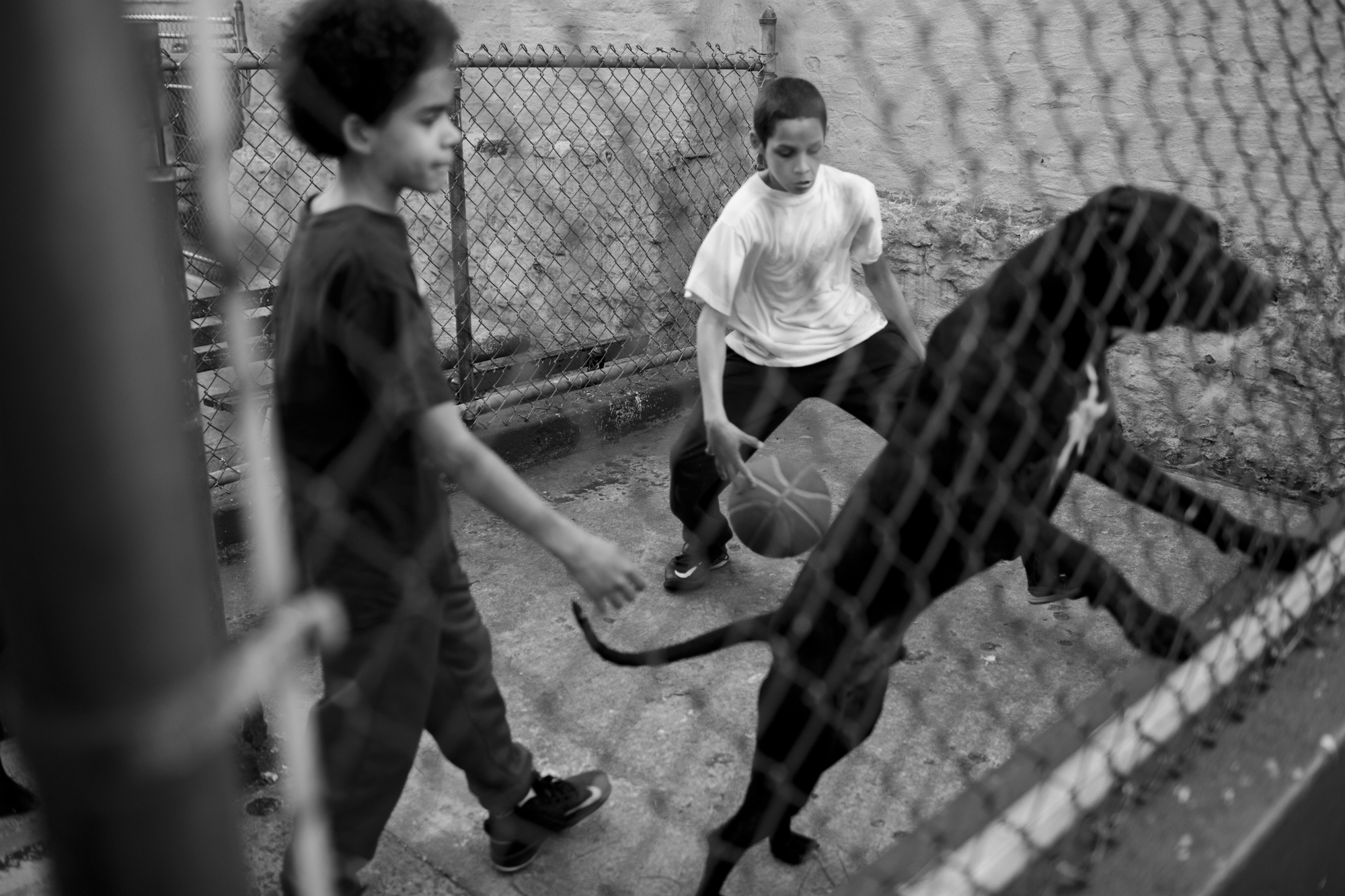 A dog jumps at passersby on the road to St. Mary's Park, April 14, 2016, Mott Haven, Bronx. St. Mary's is a recreational center, and hosts weekly events for the Mott Haven community. (Photo by Sarah Blesener/GroundTruth/Alexia Foundation)