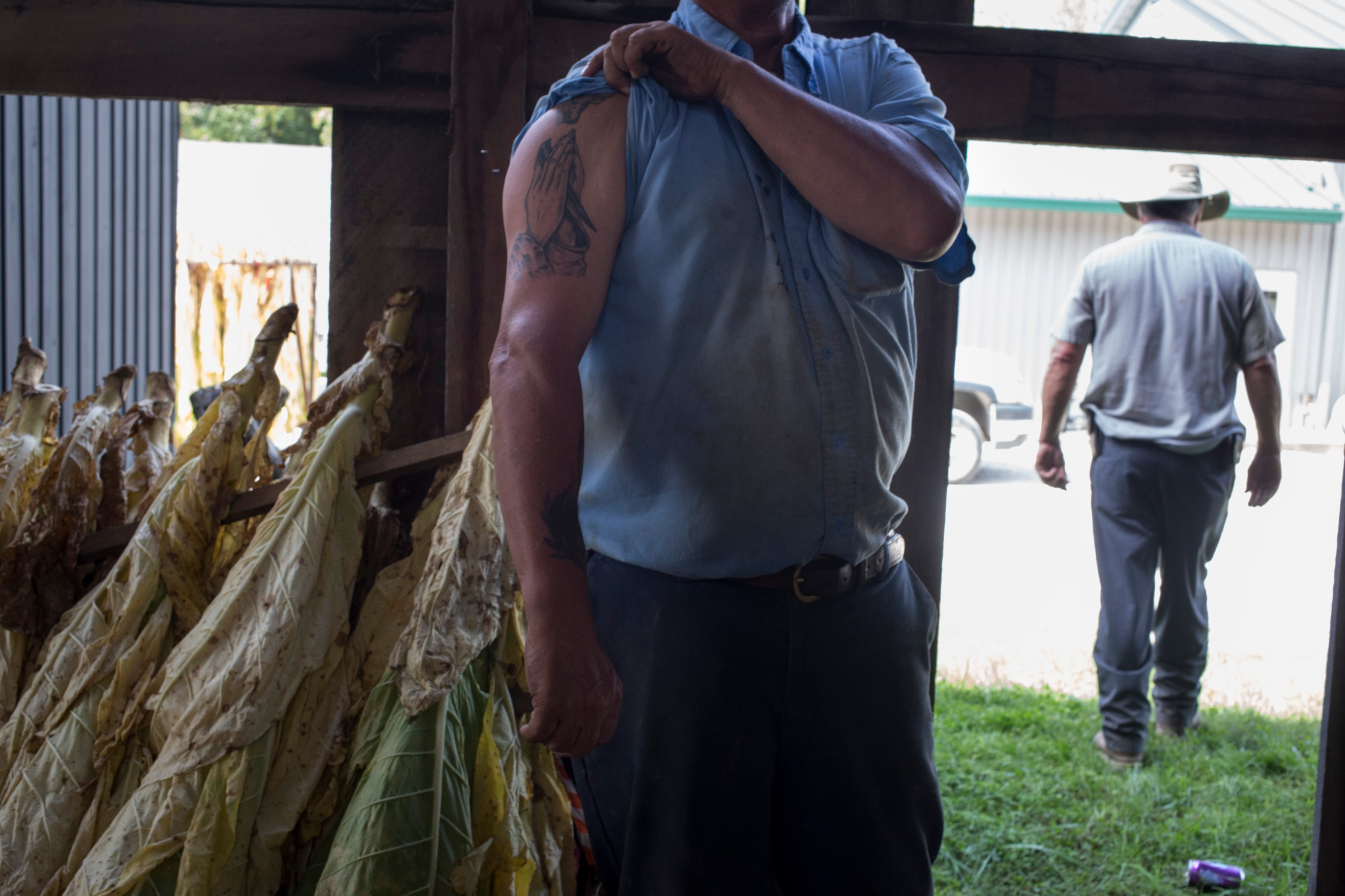 Clifford Green, 54, displays a religious tattoo while working with tobacco at the Robinson Center for Appalachian Resource Sustainability in Quicksand, Ky., on Monday, September 27, 2017. (Photo by Brittany Greeson/GroundTruth)