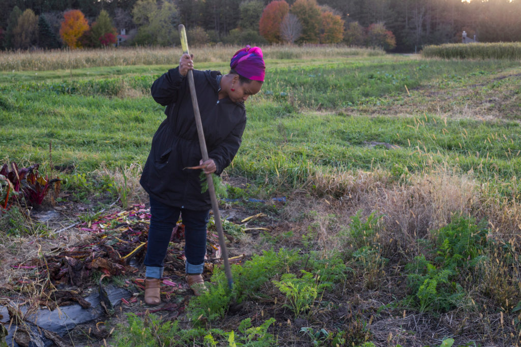 Naima Dhore, 33, works to pull a carrot from her plot of land in Marine on St. Croix, Minn., on Friday, October 13, 2017. (Photo by Brittany Greeson)