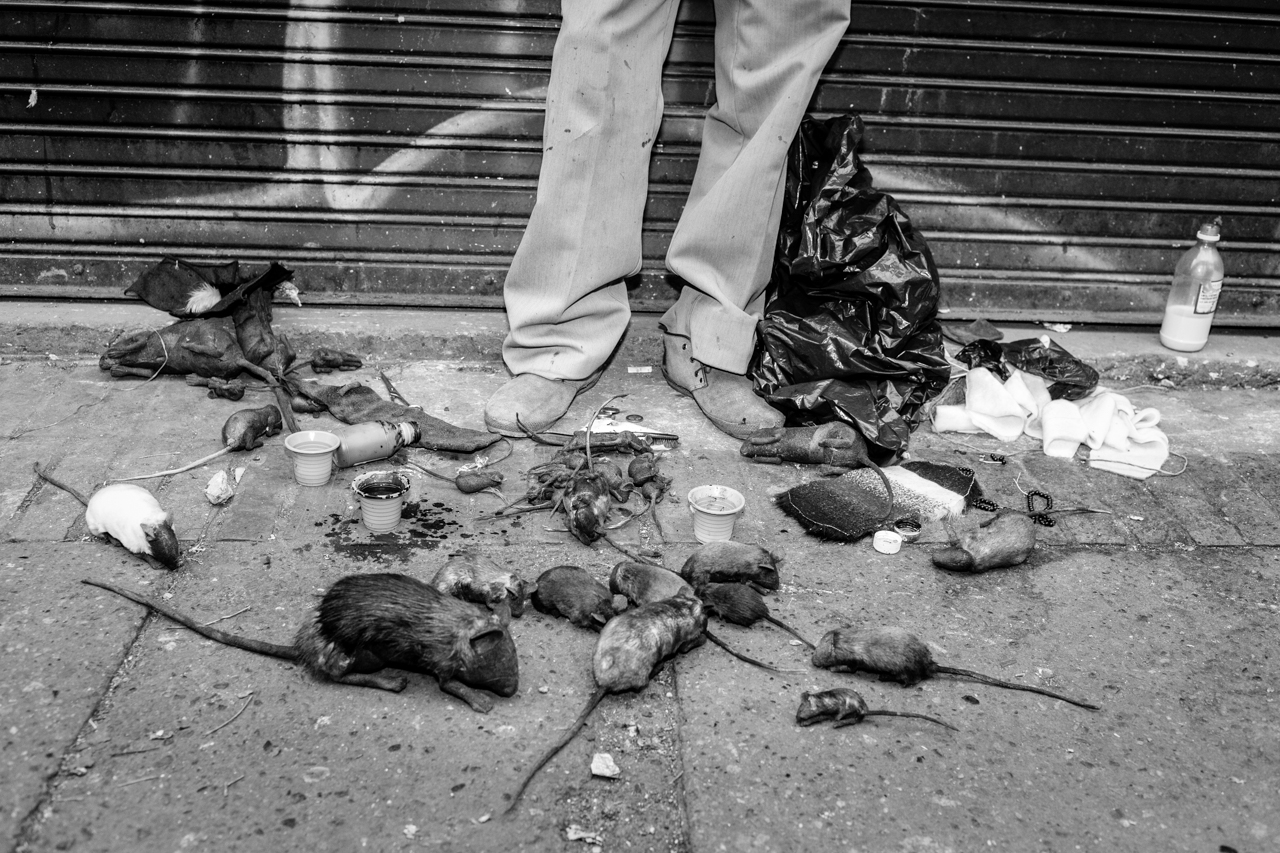 A man sells fake rats, which are used mostly to perform pranks. May 31, 2015. (Juan Cristóbal Cobo)