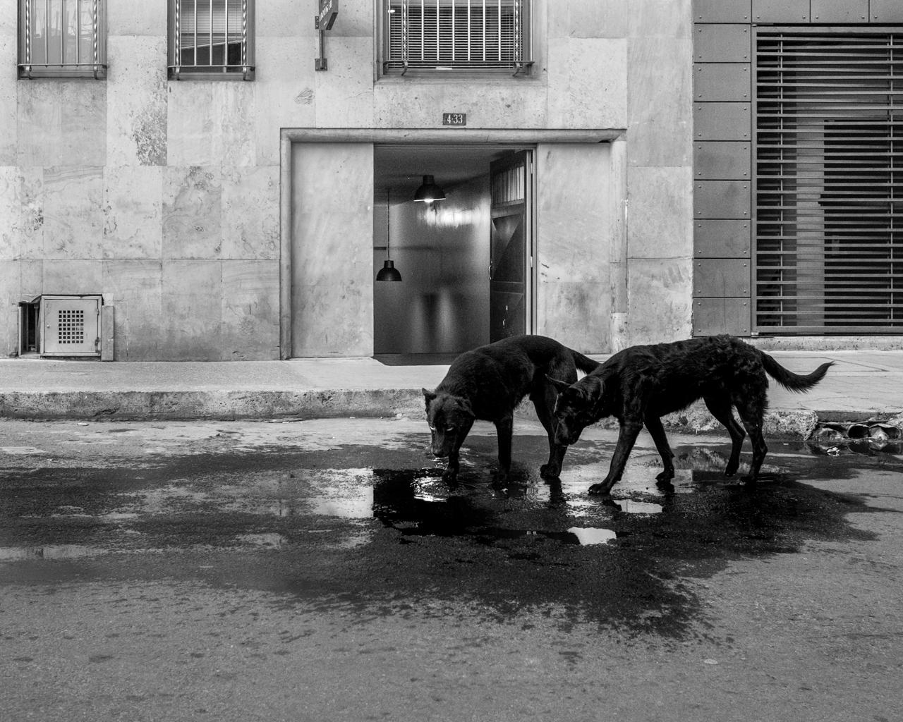 Stray dogs in Bogotá. Sept. 25, 2015. (Juan Cristóbal Cobo)