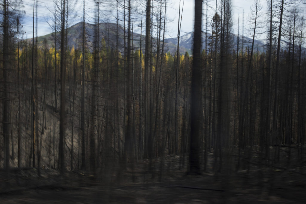A patch of scorched trees from the Rice Ridge fire are seen just outside of Seeley Lake, Montana, on Thursday, October 19, 2017. (Photo by Brittany Greeson)