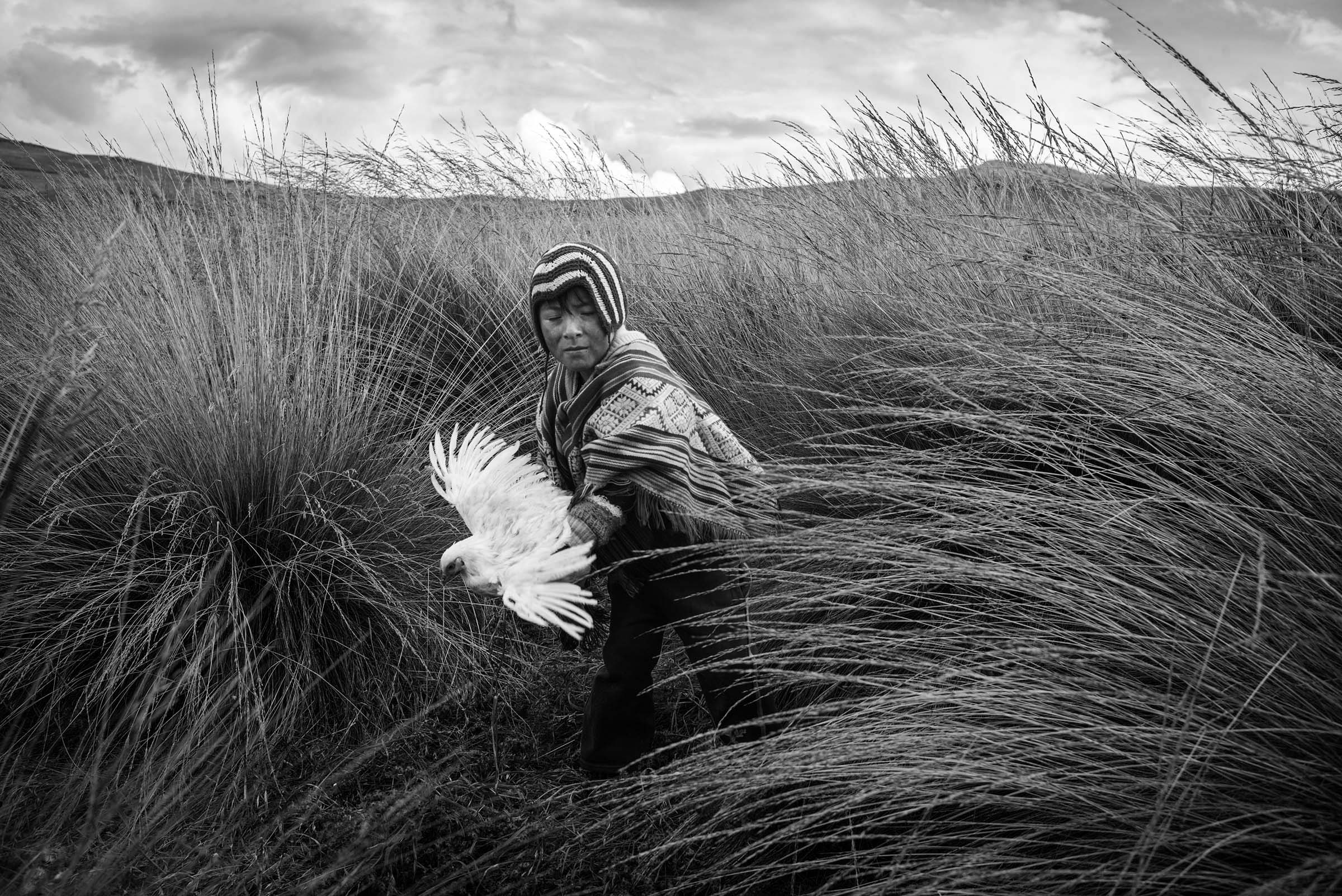 A young Quechua boy captures a rooster in the tall grass near his home in the Sacred Valley. (Alessandro Cinque/GroundTruth)