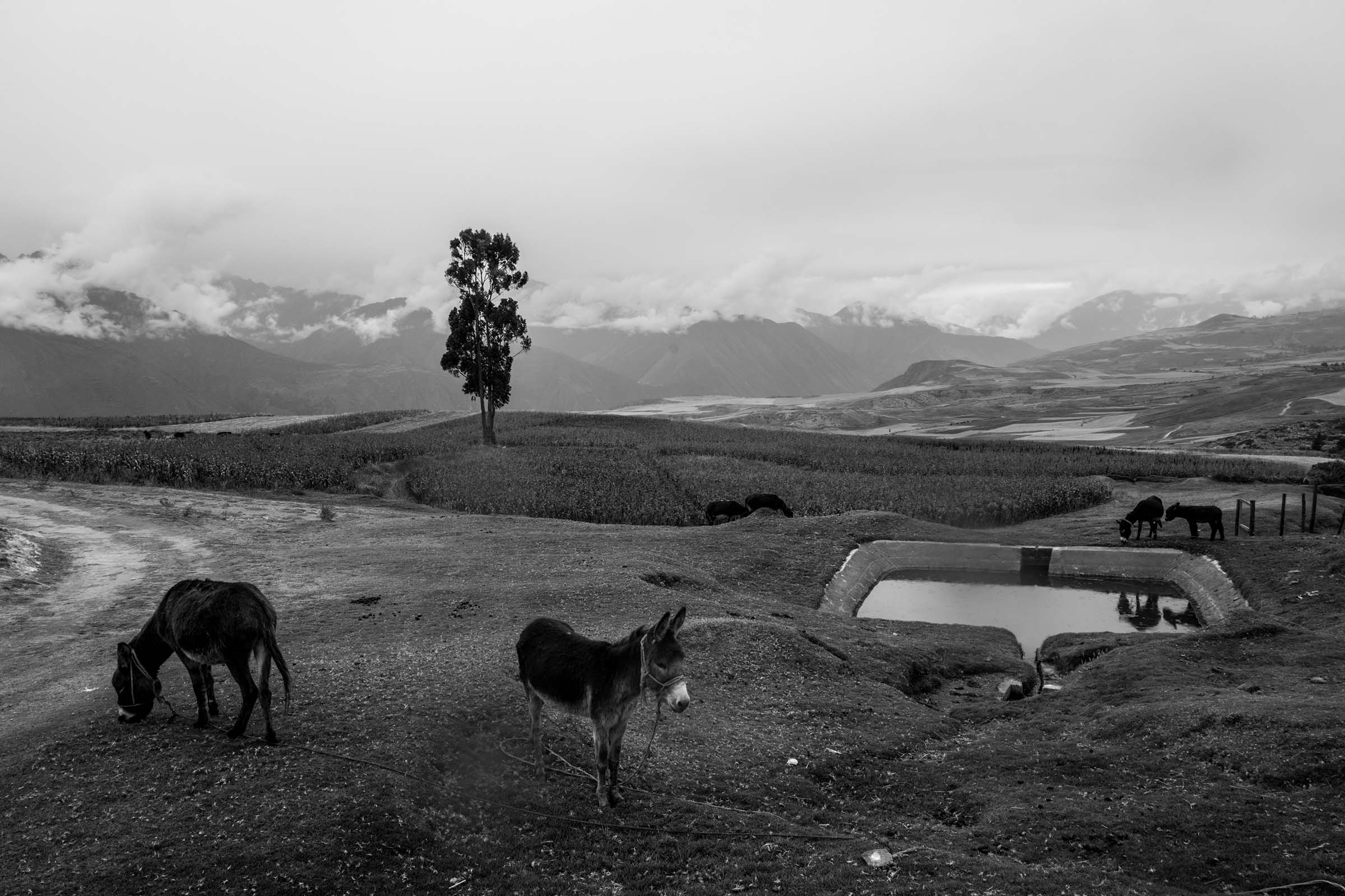Donkeys graze in a meadow. (Alessandro Cinque/GroundTruth)
