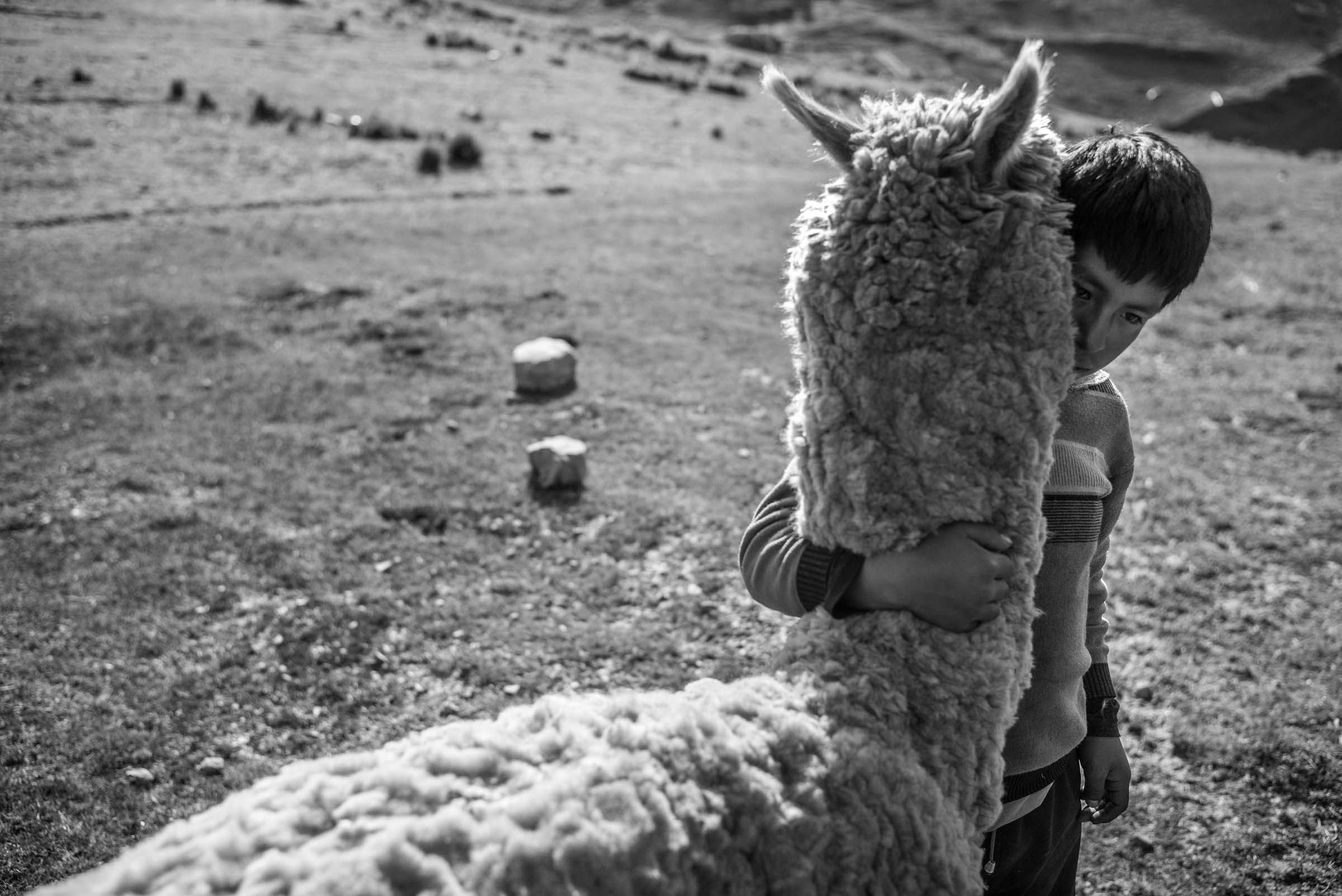 An intimate moment between a child and a llama, speaks to how close the people of the Sacred Valley live to the land and their animals. (Alessandro Cinque/GroundTruth)