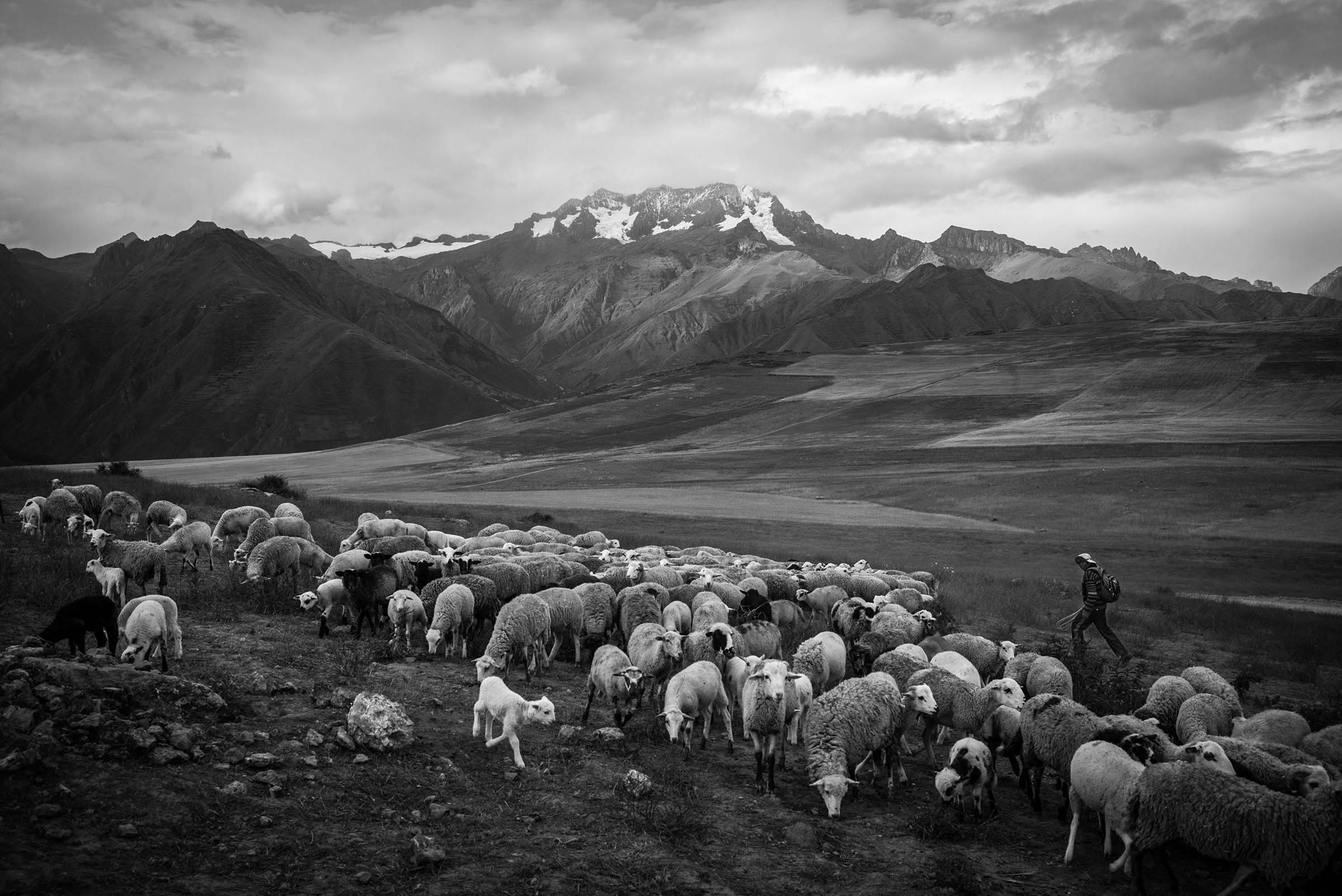 A nomadic herder with sheep high in the Sacred Valley near the village of Huarocondo. (Alessandro Cinque/GroundTruth)