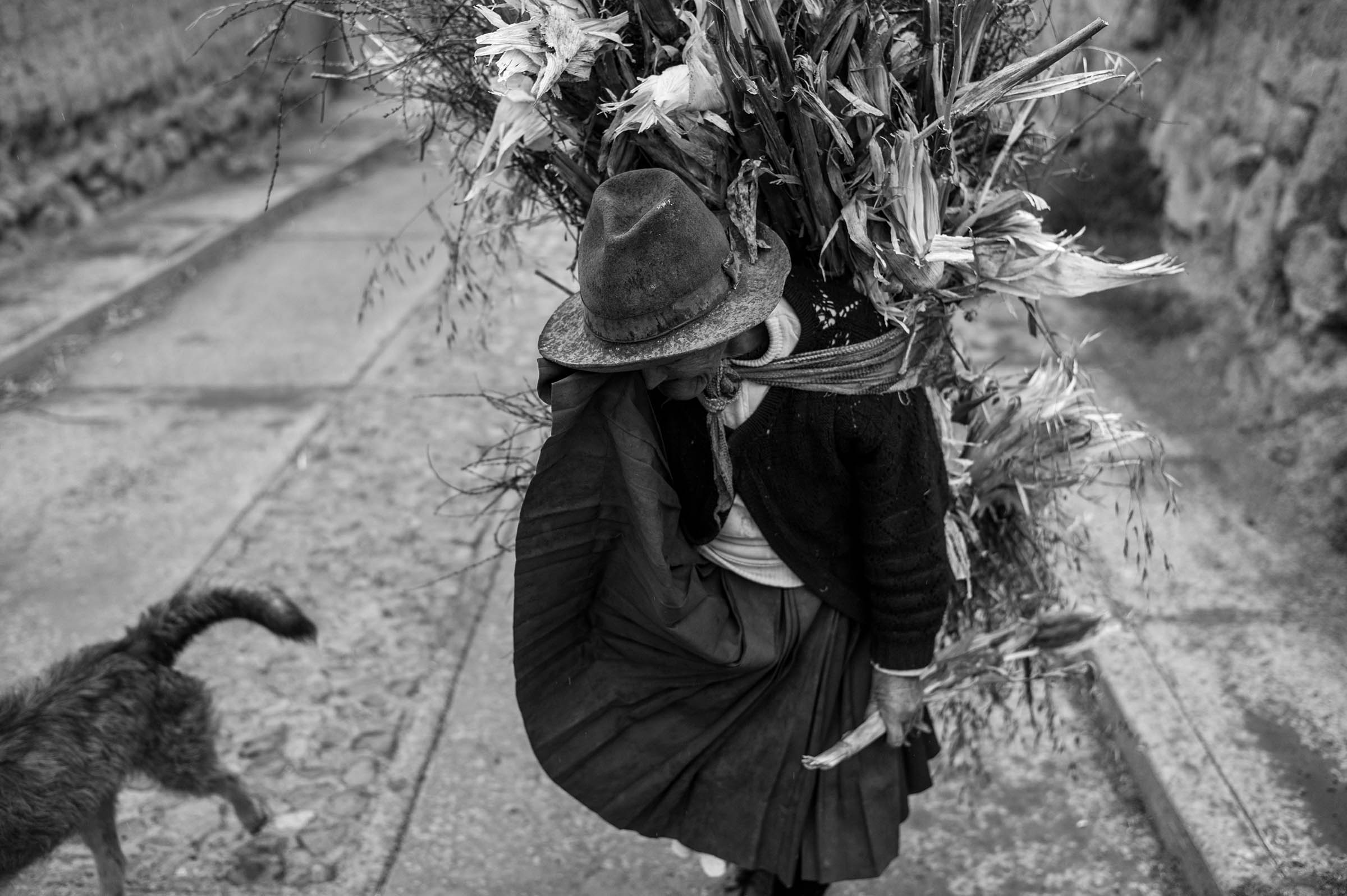A woman carries maize just harvested from the Sacred Valley near Moray, Peru. (Alessandro Cinque/GroundTruth)