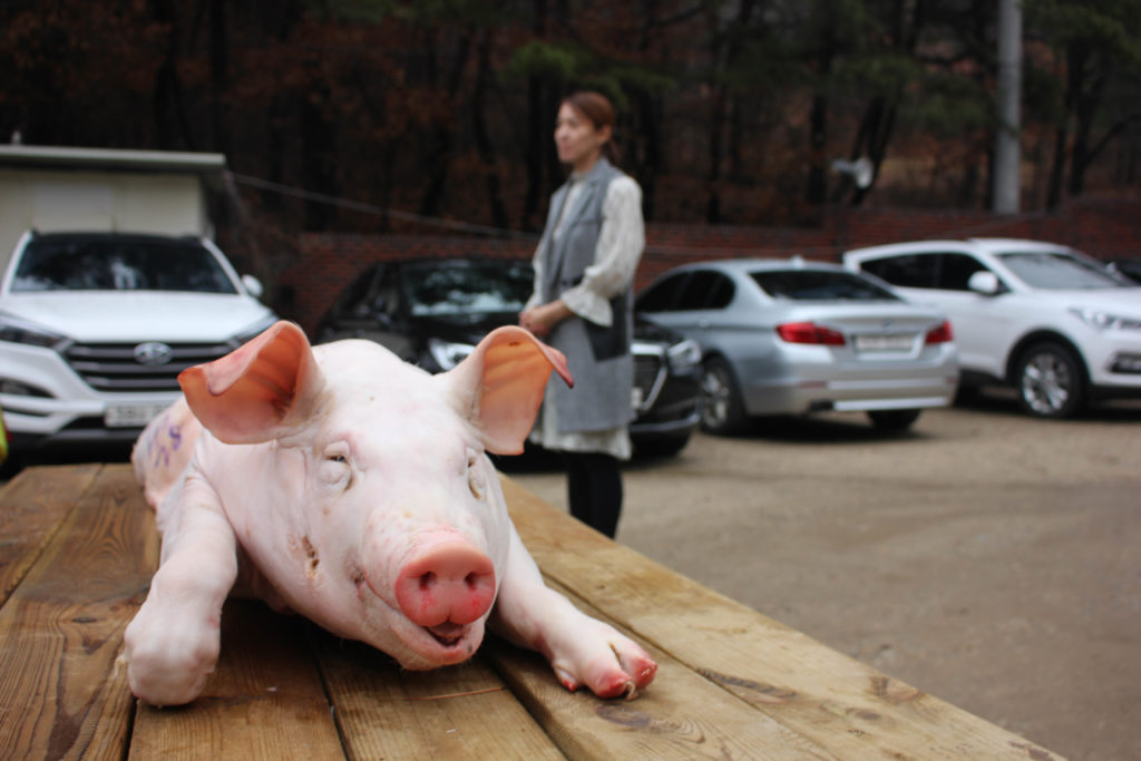 The climax of the ceremony was performed outside, where Choi waited patiently for the pig to be offered. (Miranda Mazariegos/GroundTruth)