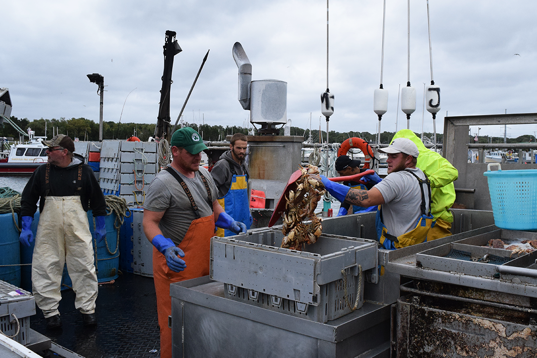 A fishing boat crew fills plastic tubs with Jonah crab for unloading. (Photo by Pien Huang/WCAI)