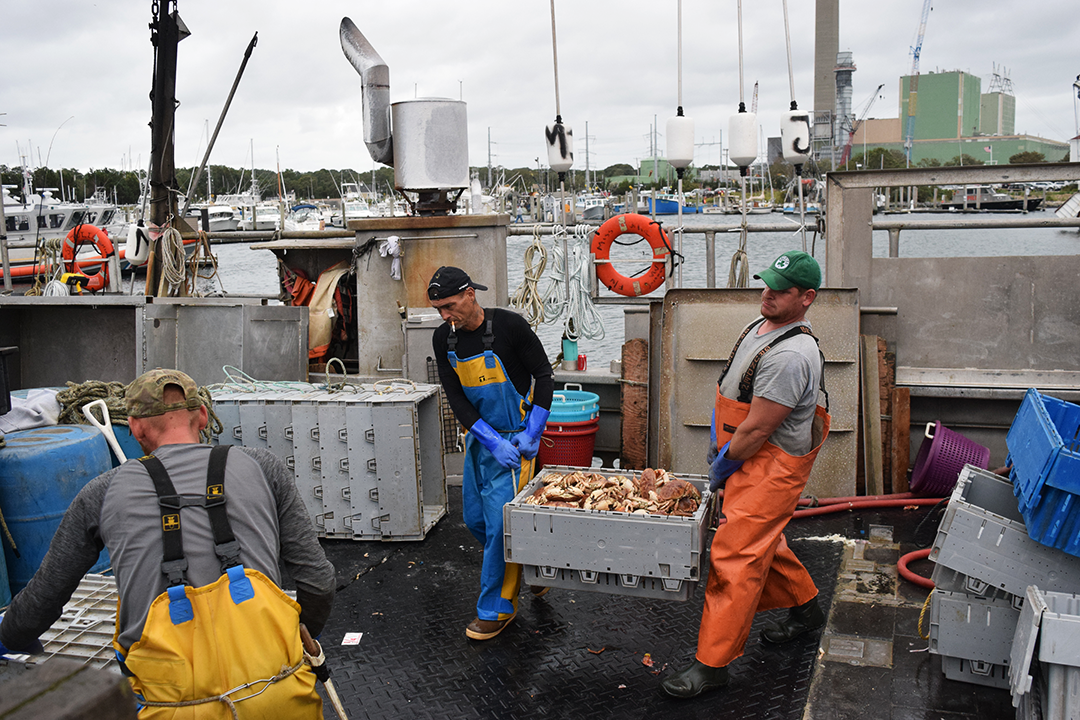 Jonah crab landings have tripled in the past decade, from about 4 million in 2007, to 12 million last year. (Photo by Pien Huang/WCAI)