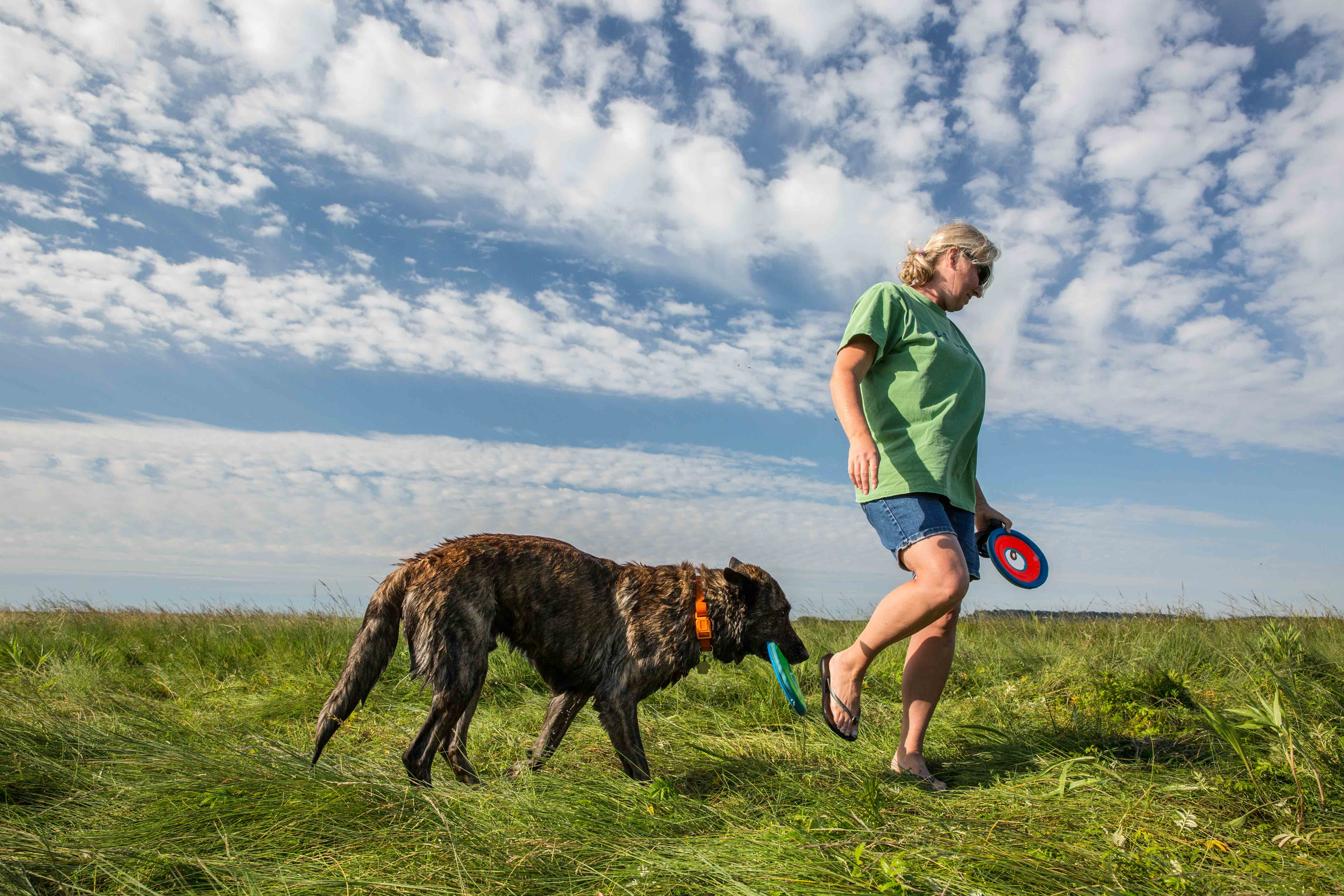 Heeding the call of the Great Marsh in Newbury, Chris Howe was up early on the summer solstice for a romp with her dog, Kane. The pair often heads to the wide open space here where dogs can run free. (Photo by Coco McCabe/GroundTruth)
