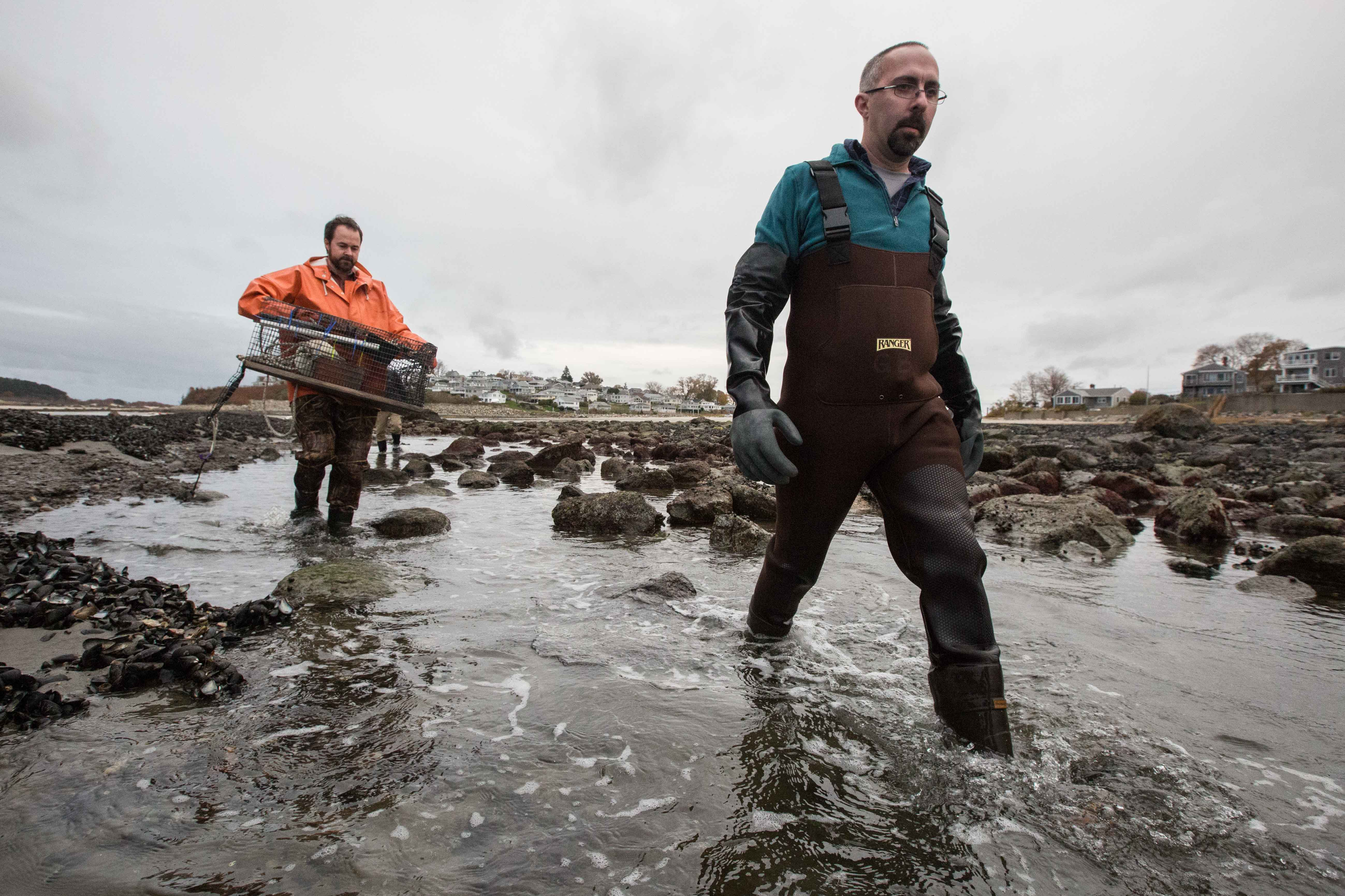 Ryan Joyce (in the orange coat) and Greg Bettencourt, both with the Massachusetts Division of Marine Fisheries, get ready to test the water off Pavilion Beach in Ipswich to investigate why local mussels are flourishing. Their findings could help others establish new mussel beds on the marsh. (Photo by Coco McCabe/GroundTruth)