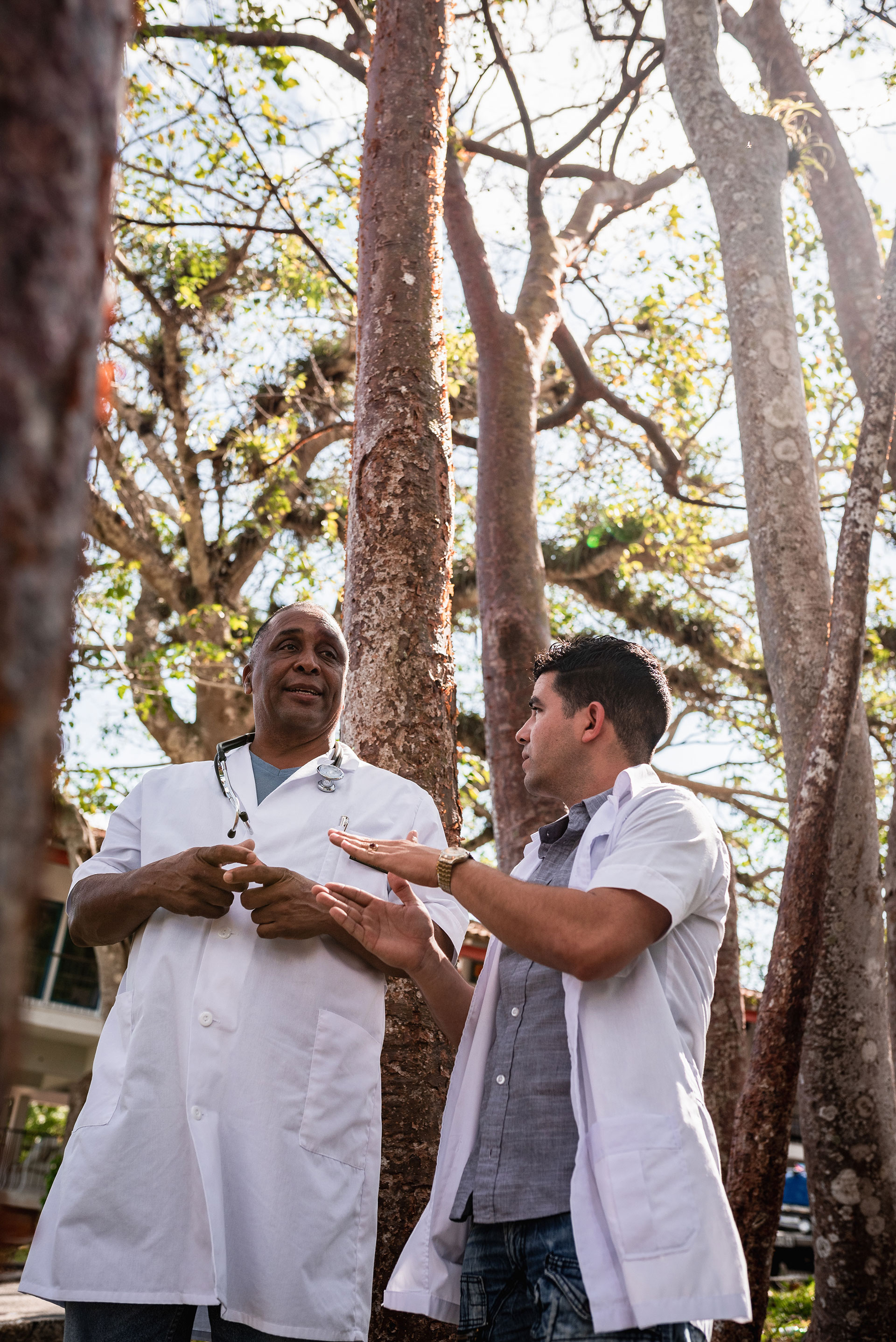 "Dr. Rodobaldo Pedroso (left) and Dr. Rafael Chamizo Gonzalez (right) demonstrate the turpentine tree, nicknamed ""la turista"" for its red, peelable bark at Las Terrazas on March 3, 2019. The bark of the tree is boiled with water to fight colds, and the leaves are used to treat rashes. (Photo by Danny Hentz/GroundTruth)"
